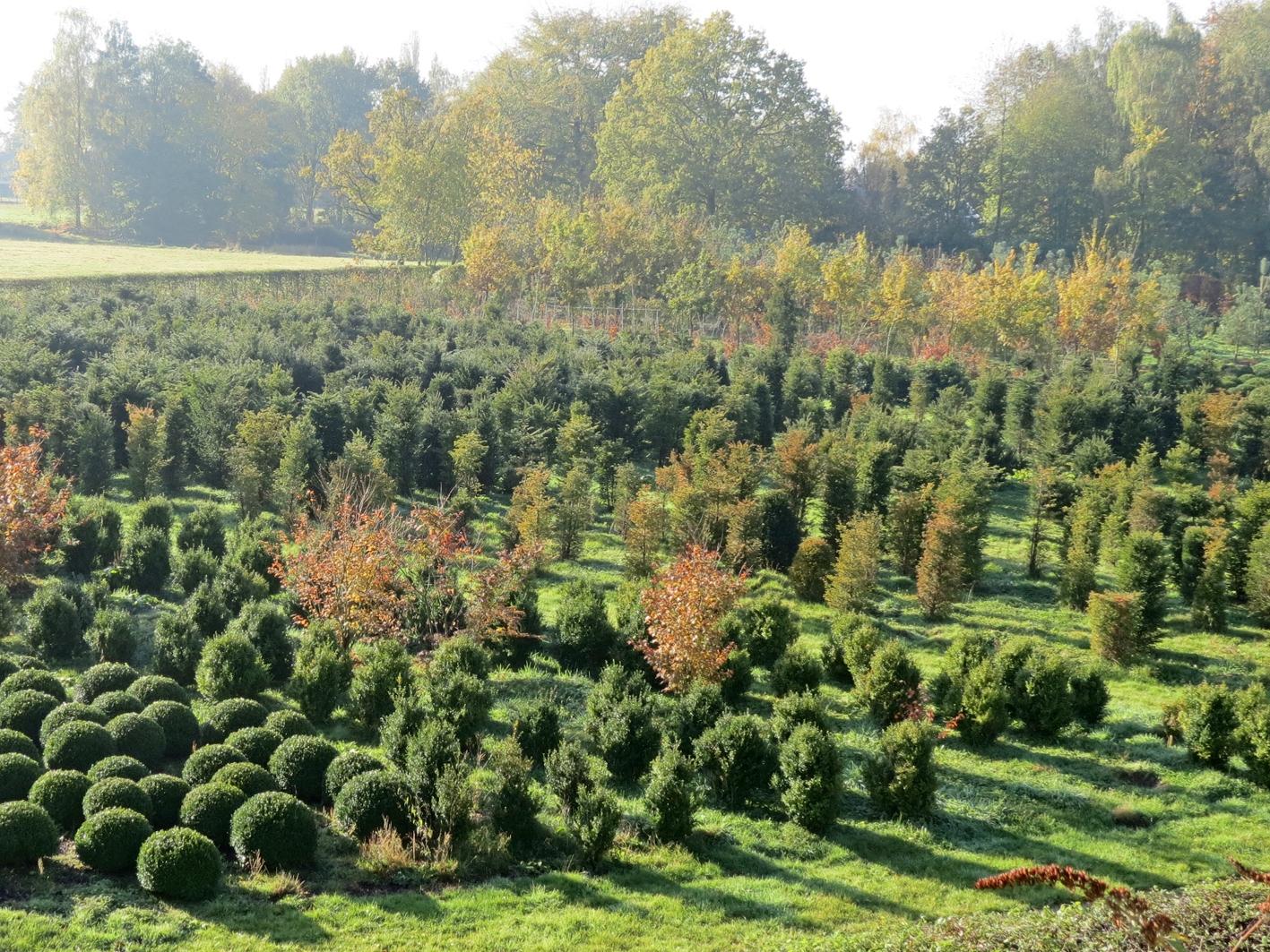 architecte et aménagement de jardins pépinière