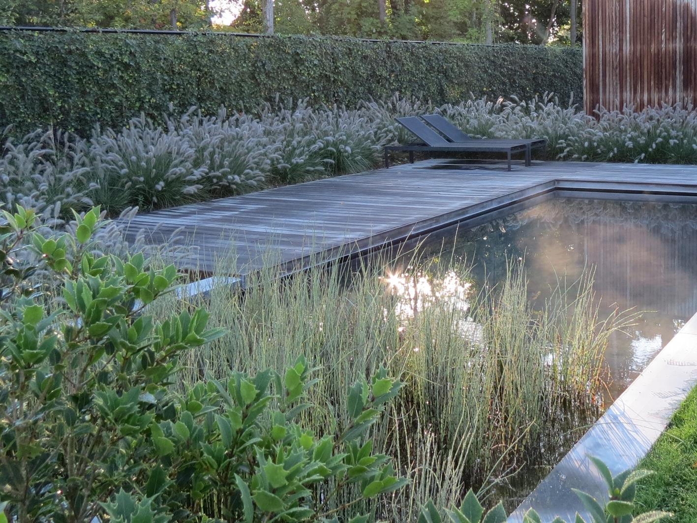 Automne sur la piscine biologique